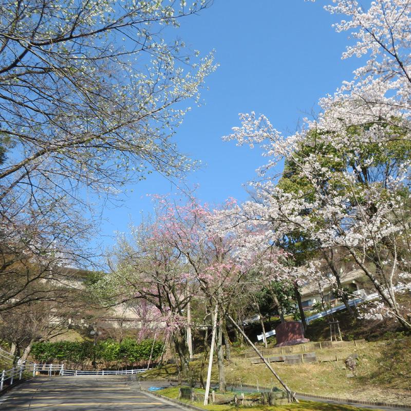 桜の門から